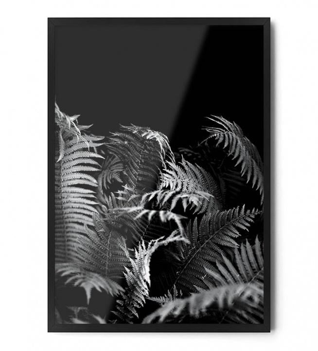 Plakat PAPROĆ (czarno biała)  Dostępny w rozmiarach: A3 40/50 cm 50/70 cm 70/100 cm +inne na życzenie
