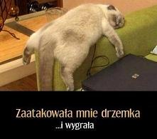 Atak drzemki - śmieszne koty