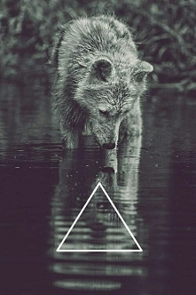 A dzisiejszego wieczoru będę wilkiem.. samotnym silnym wilkiem