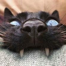 jaki słodki wampir