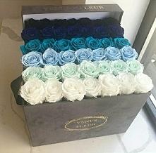flowers, blue, white, Venus fleur