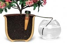 Blumat do roślin domowych.