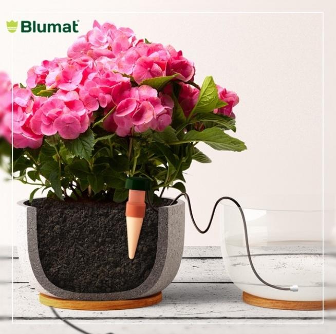 Blumat do roślin domowych - niezastąpiony gadżet podczas wyjazdu na urlop.