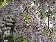 wiosna rozkwita
