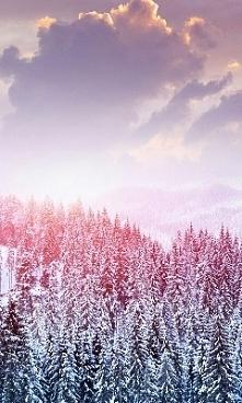 kolorowy las marzeń