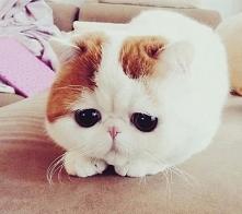 kotełek :*