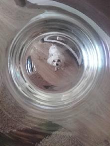 pies w szklance