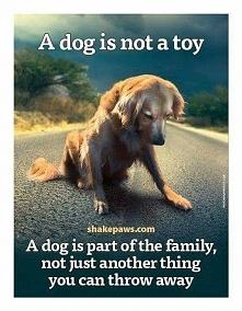 Pies to nie jest zabawka.!