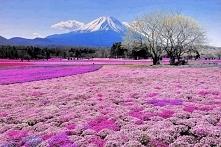 Góra Fuji wczesną wiosną, Japonia