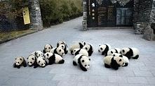 Słodziudkie pandunie :)