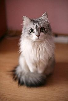 ten kot jest ładniejszy ode mnie :D