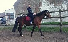 Łapcie Kruszynki. Mojego ukochanego Łobuziaka ♥ conversy na konie, mało profe...