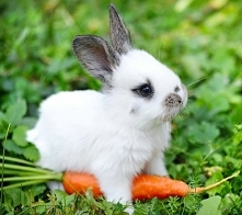 króliczek♡