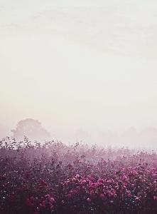 łąka w mgle *.*