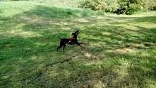 Pamiętajcie o podlotach - nie puszczajcie psów luzem. Wczoraj znów widziałam dwa maleństwa rozszarpane w parku...
