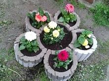 Mój kwiatek: dalie i begonie.