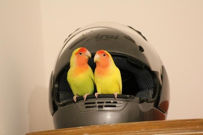 Tata i syn zawsze razem. Ćwirki nie lubią robić zdjęć zawsze uciekają. Na balkonie synek karmi wróble, wyrzuca swoje ziarenka z klatki by nakarmić ptaszyny. A w domu czują się jak w dżungli.