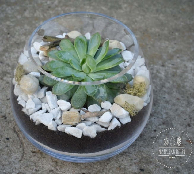Nasze sukulentowe terraria idealne na prezent dla mamy