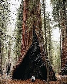 Park Narodowy Sekwoi, USA.