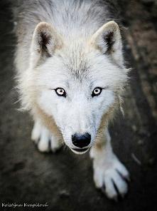 Wolf *-*