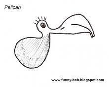 Pelican ...