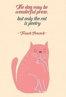 Francuskie przysłowie dla ... miłośników kotów.