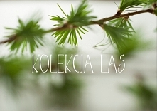 miodunka.com.pl