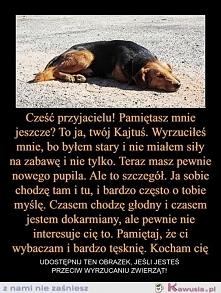 łezka w oku sie kręci... widziałam na przykładzie mojego psa ktorego teraz mam, pewien czlowiek znalazl go w lesie pies wtedy (połtora roczny) lezał w lesie nie chodzil ! na szc...
