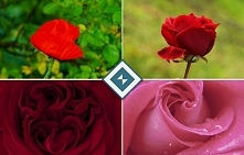 Róże to kwiaty, które potrafią pomóc nam wyrazić wiele różnych uczuć. Obrazy z nimi w roli głównej świetnie sprawdzą się na przykład w sypialni do podkreślenia romantycznego nas...