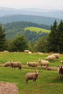 Sokolec - góry - więcej ujęć po kliknięciu w zdjęcie