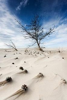 Madwiny - ruchome wydmy - Słowiński Park Narodowy.  Jedyne takie miejsce w Eu...