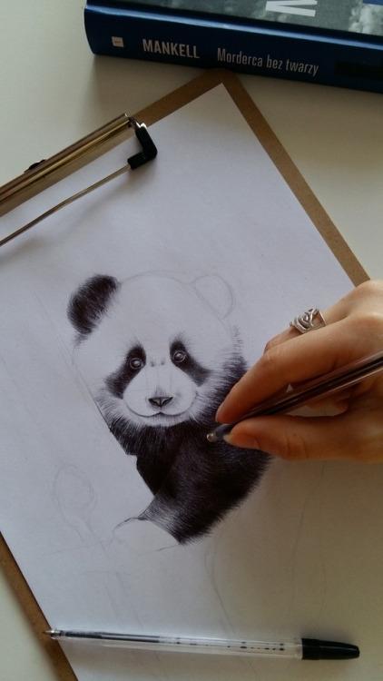 Panda... w trakcie. FB/zuzarysowana