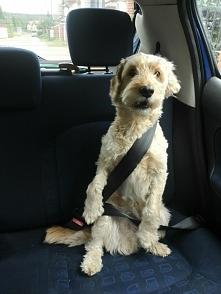 #w samochodzie :)