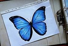 Mój motylek :)