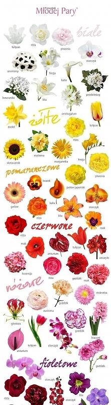 rodzaje kwiatów