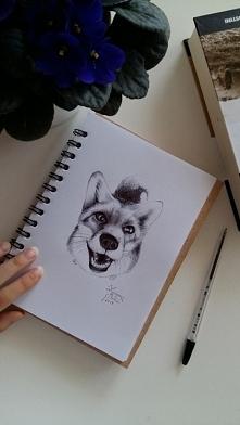 Lis, długopis w szkicowniku...