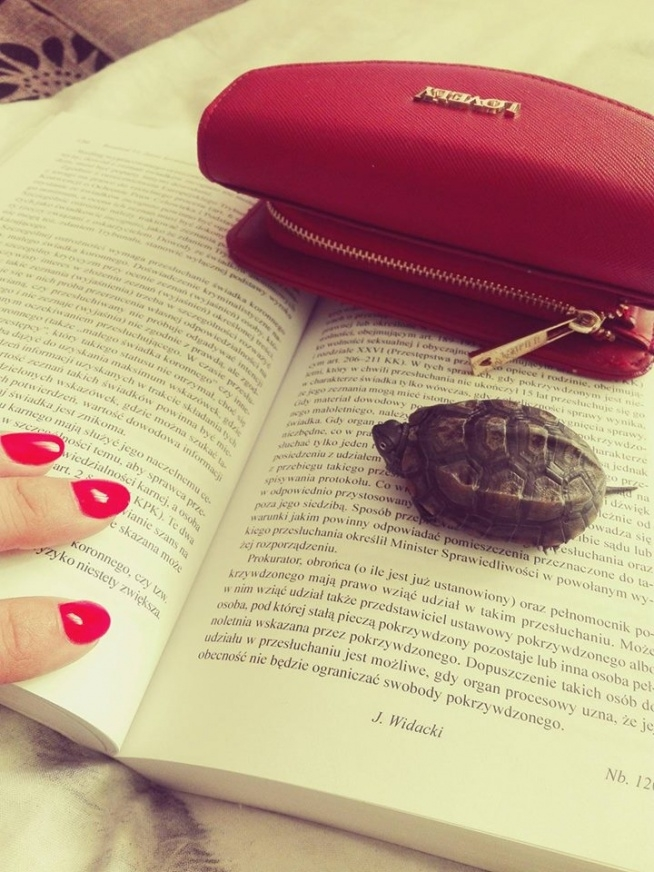 Żółw też musi być mądry ;)