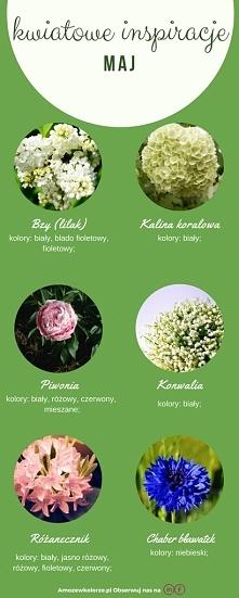 Kwiaty, które kwitną w maju :)