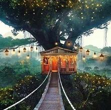 Magiczny Domek na drzewie..