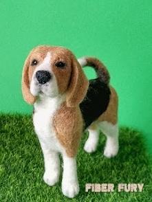 Beagle figurka z wełny,więcej na blogu.  Beagle needle felted realistic figurine more on Blog.