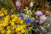 Kwiaty z ląki