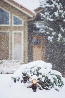 ścinaliście w zimie choinkę czy kupowaliscie?