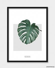 3x Plakaty botanicals (zamó...