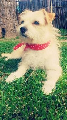 1 lipiec -Światowy Dzień Psa -Bo tylko On potrafi być najlepszym przyjacielem...