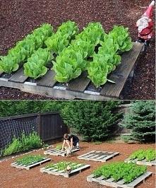 Ogródek warzywny w paletach