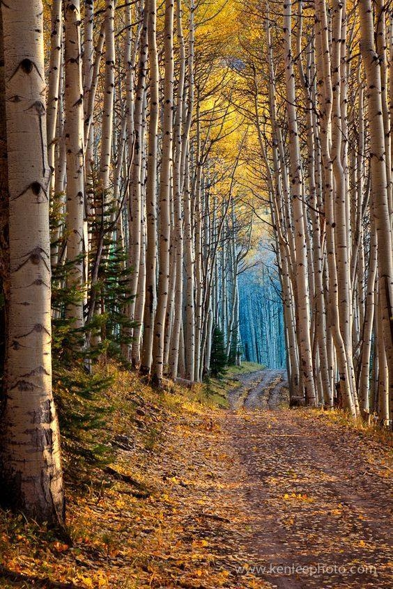 Aspen Cathedral, Colorado, USA
