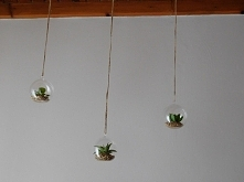 moje wiszące ogrody :)  sztuczne roślinki, były raz w pepco.
