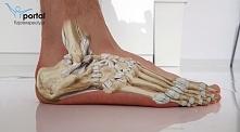 jak zbudowana jest nasza stopa?
