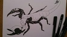 1  raz rysowany skorpion - na zamówienie, zobaczymy co wyjdzie ;)