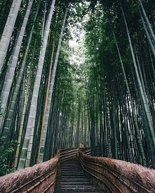 Piękno codzienności w Japonii.